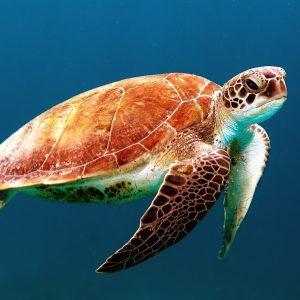 la biodiversité animale marine