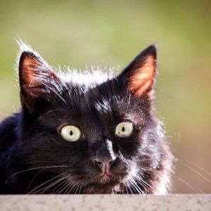 Mon chat m'a hypnotisé